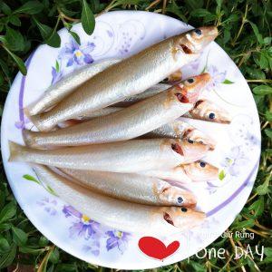 cá bống đục