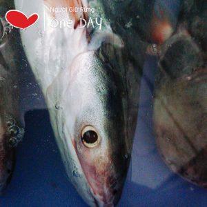 cá dứa tươi